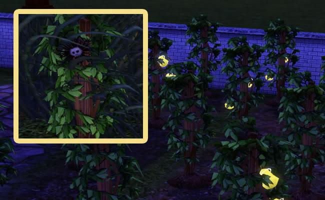 Где найти в симс 3 цветок смерти
